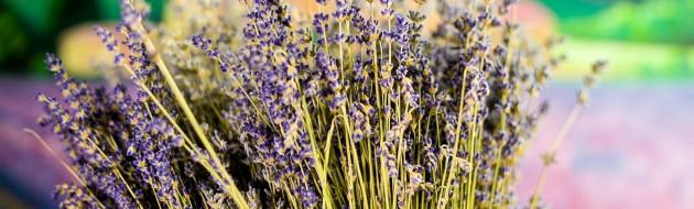 Lavender Flower - JuvanNet